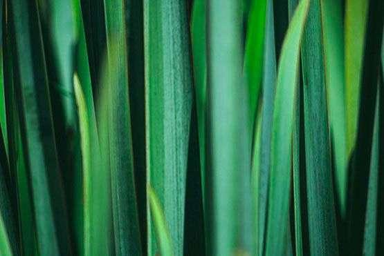 fragancia eucalyptus